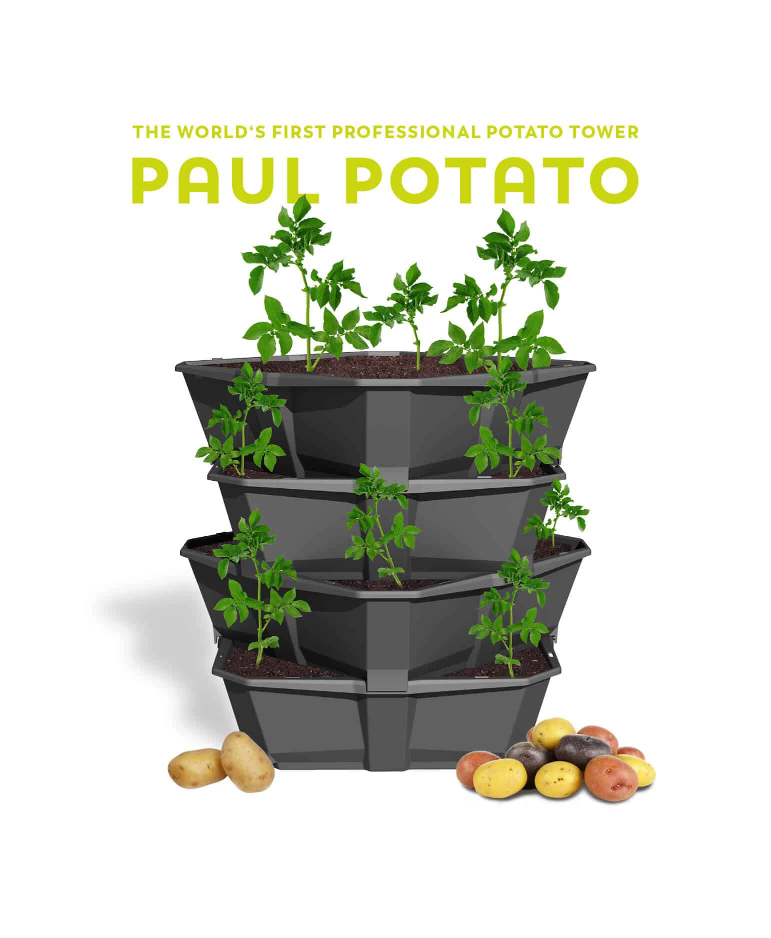 Paul Potato